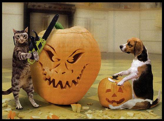 Cats and Dogs and Pumpkins