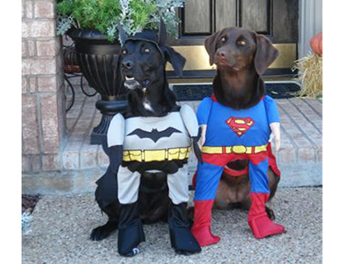 funny-dog-halloween-costumes-3